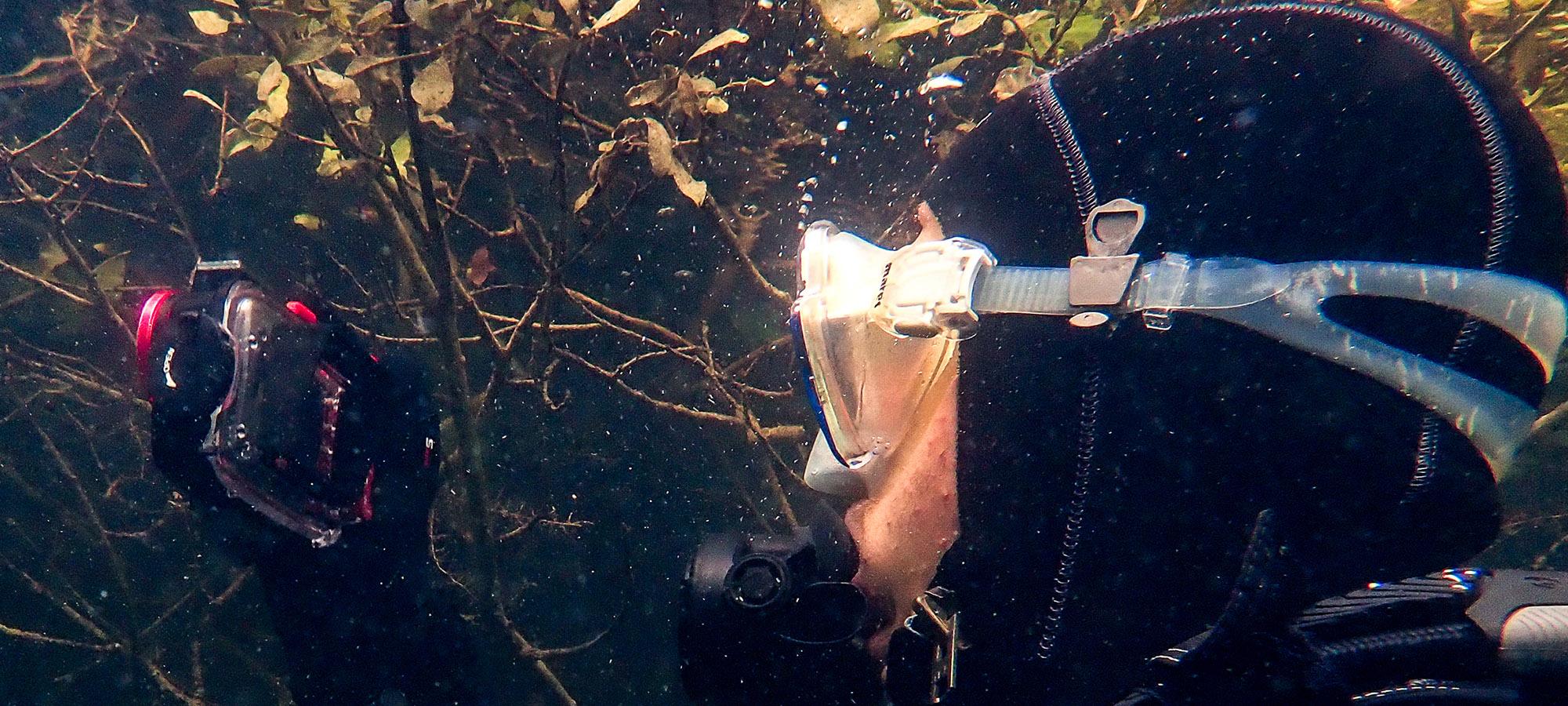 Specialisatie: Onderwaterfotografie 2019